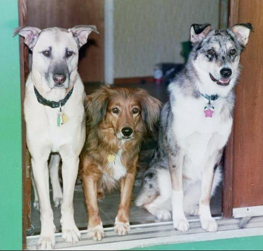 [dogs at the door]