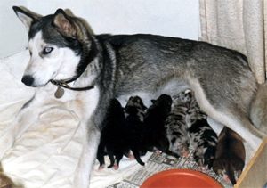 [Sheba and Puppies]
